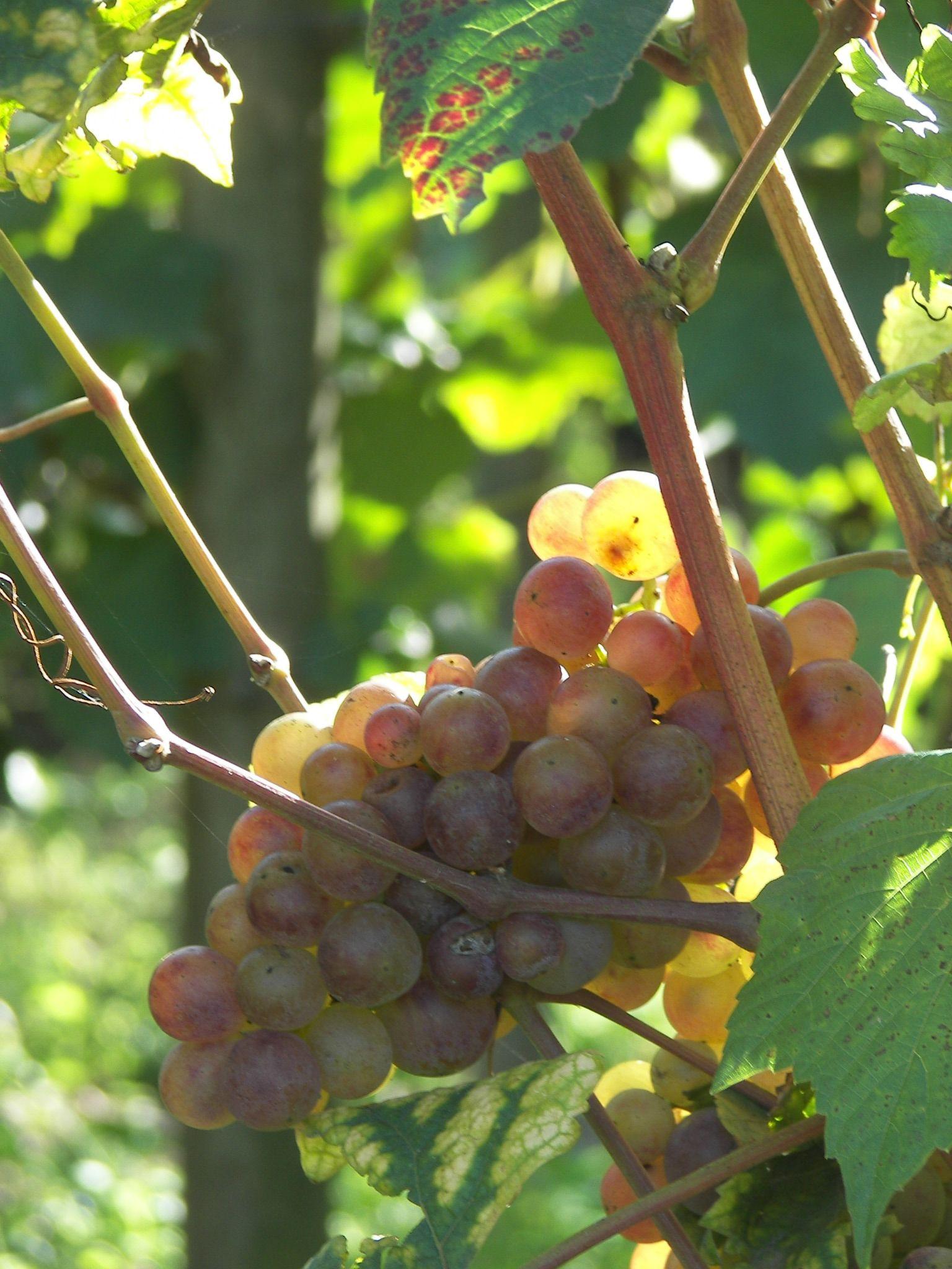 35-raisins-1